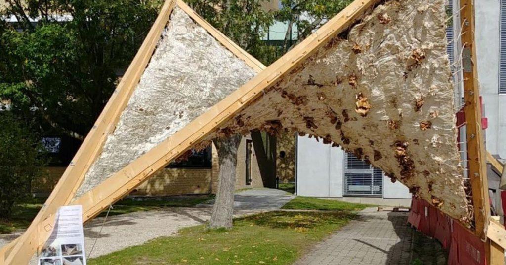 Vinderne af Circular Construction Challenge på Building Green København